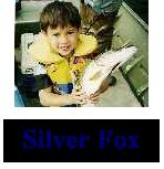 silvefox